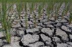 تنش آبی در ۳۰ درصد از اراضی کشاورزی شهرستان رضوانشهر
