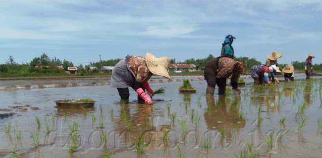 باراش باران در راه مزارع تشنه گیلان