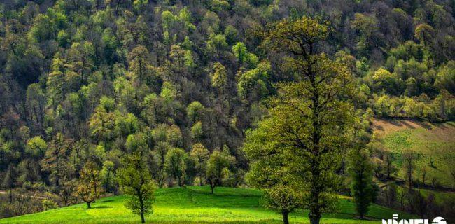 تعیین محدوده ی جنگل های هیرکانی منطقه حفاظت شده لیسار ثبت شده در فهرست میراث جهانی یونسکو