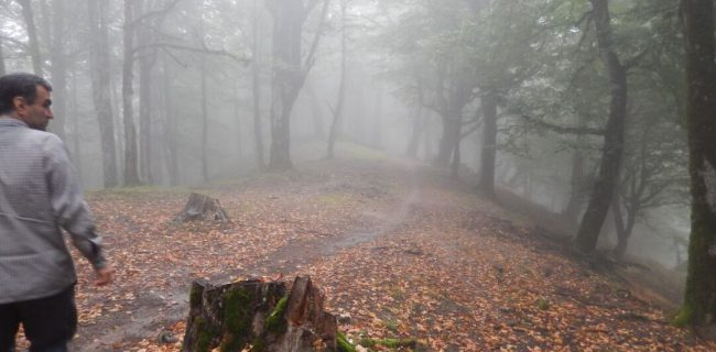 ساخت جاده لیسار گیلان در محدوده میراث جهانی هیرکانی ممنوع است
