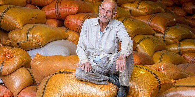 فروش سریع برنج توسط کشاورزان ، به دلیل بازپرداخت بدهی حاصل از هزینه بالای تولید