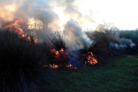 رد پای عوامل انسانی در آتش سوزی پارک جنگلی کیاشهر